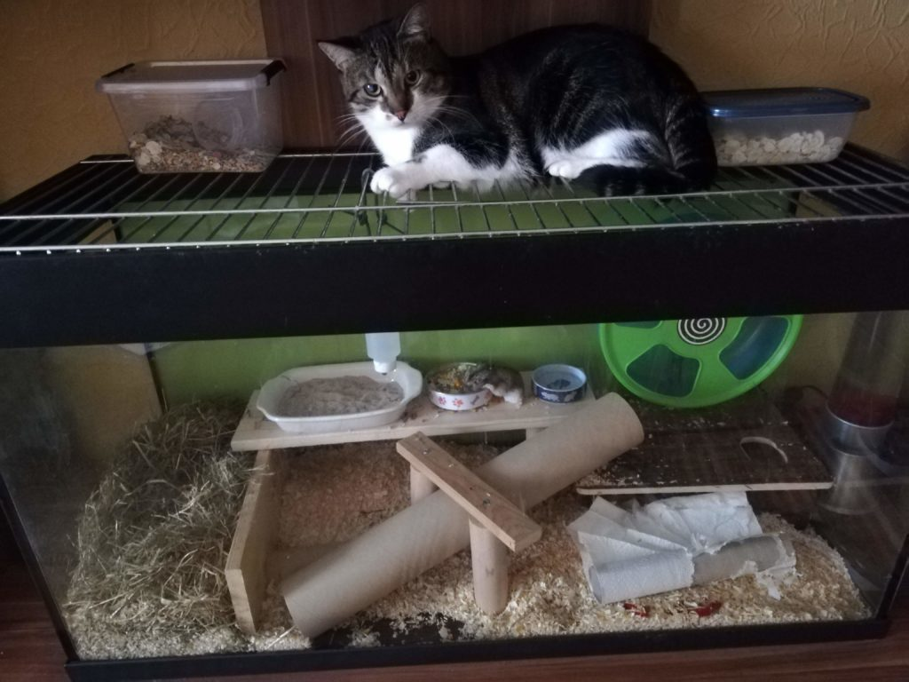 Sheldon auf dem Hamsterkäfig