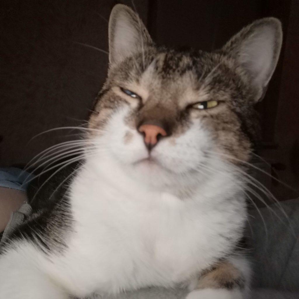 Sheldon - Der Katzen Boss