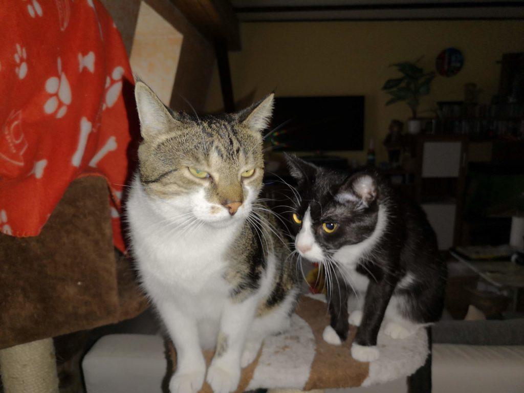 Sheldon Bos mit Abby