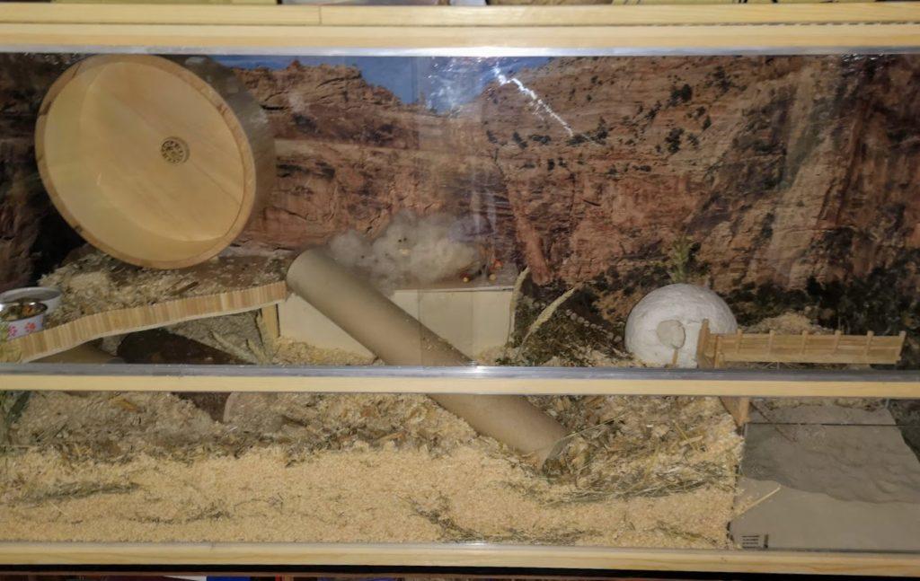 Hasel-Grace neuer Hamsterkäfig