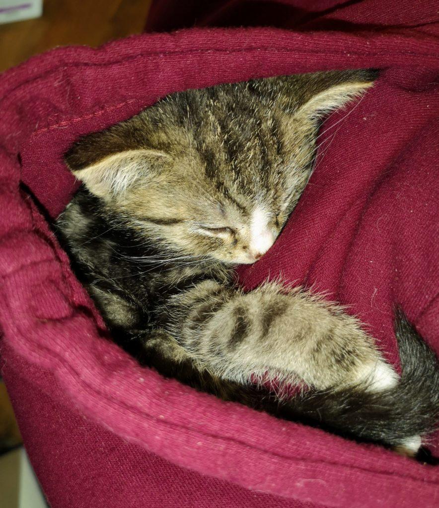 Bilbo schläft in Kapuze vom Hoodie