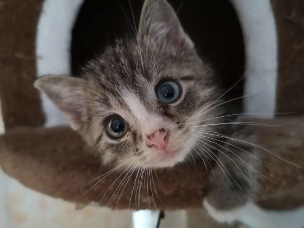 Bilbo ganz neugierig