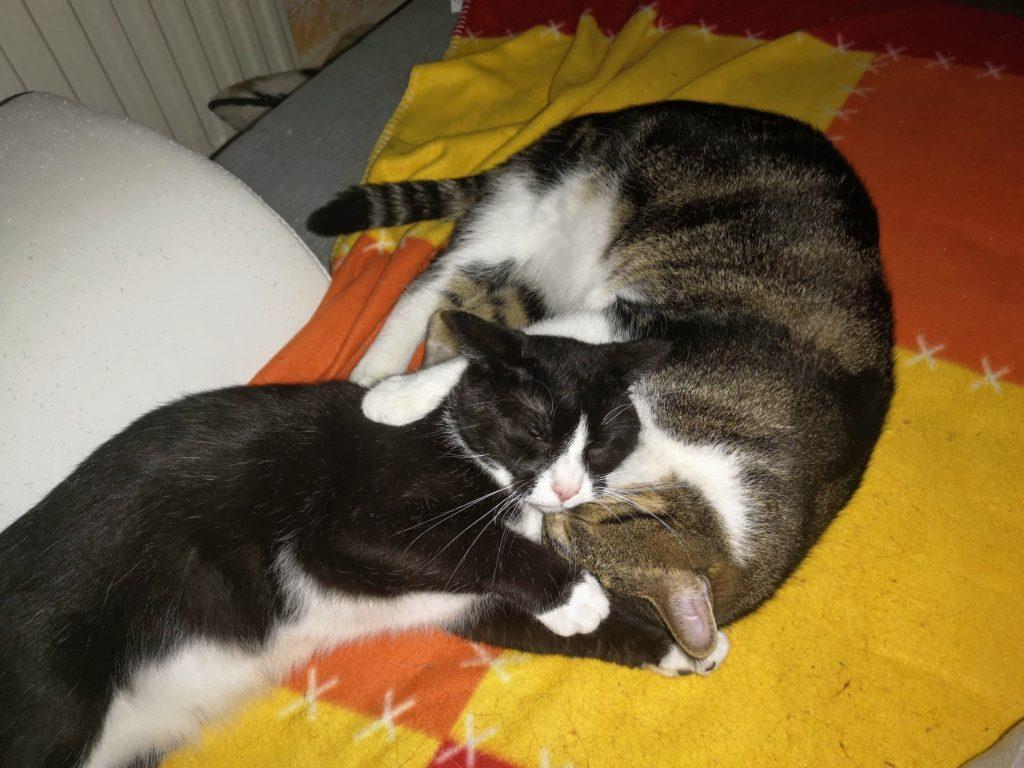 Abby und Sheldon schlafen aneinander gekuschelt