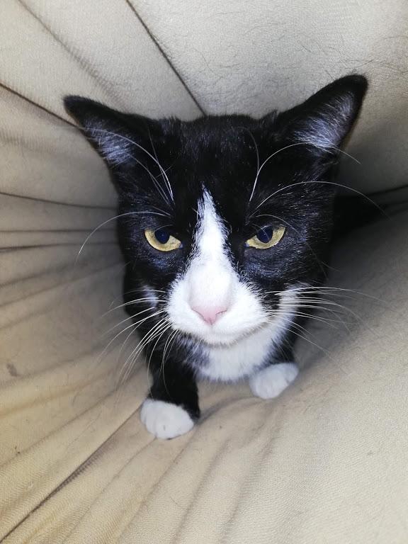 Abby in einer Matratzen Höhle