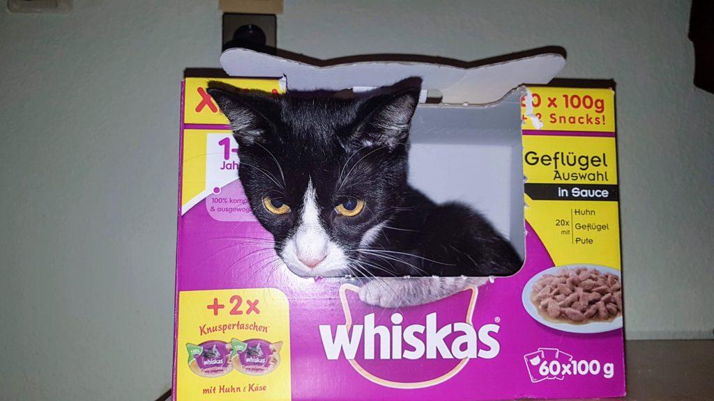 Abby hat es sich im Whiskas Karton bequem gemacht