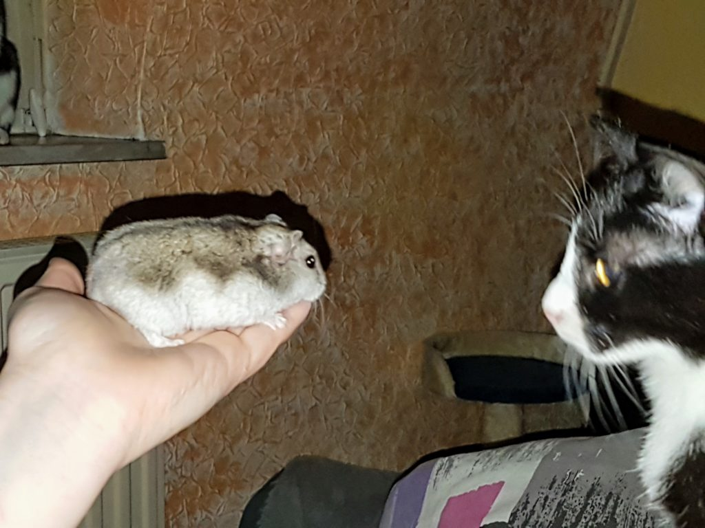 Abby lernt Schlafmütze aus der Nähe kennen