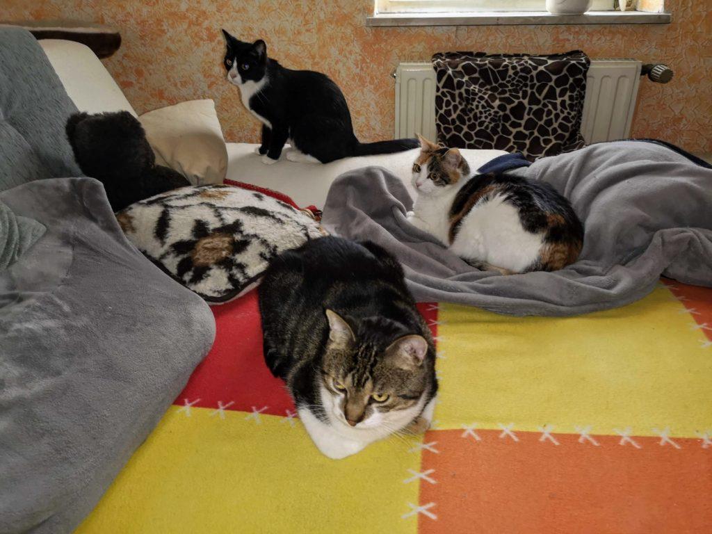 Abby, Lilly und Sheldon gemeinsam auf dem Sofa