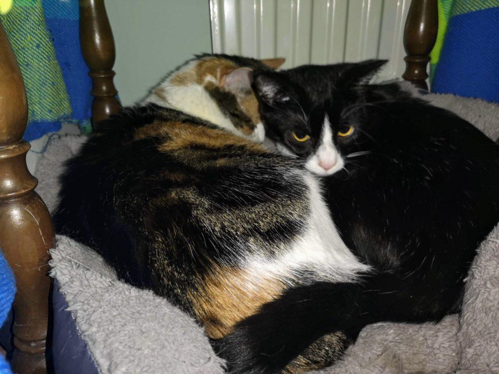Abby mit Lilly im Körbchen am Kuscheln und schlafen