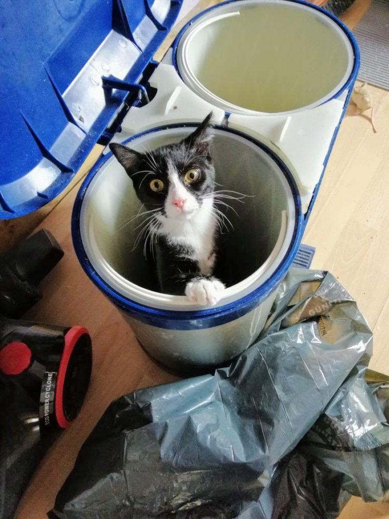 Abby schaut aus dem Mülleimer raus
