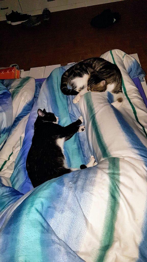 Abby schläft am Bettende