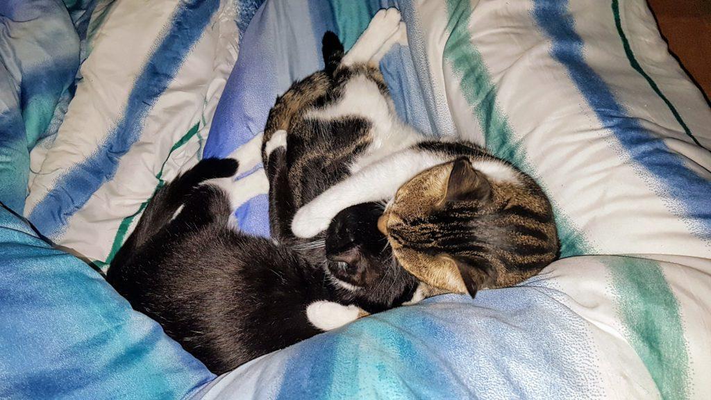 Abby und Sheldon schmusen im Bett