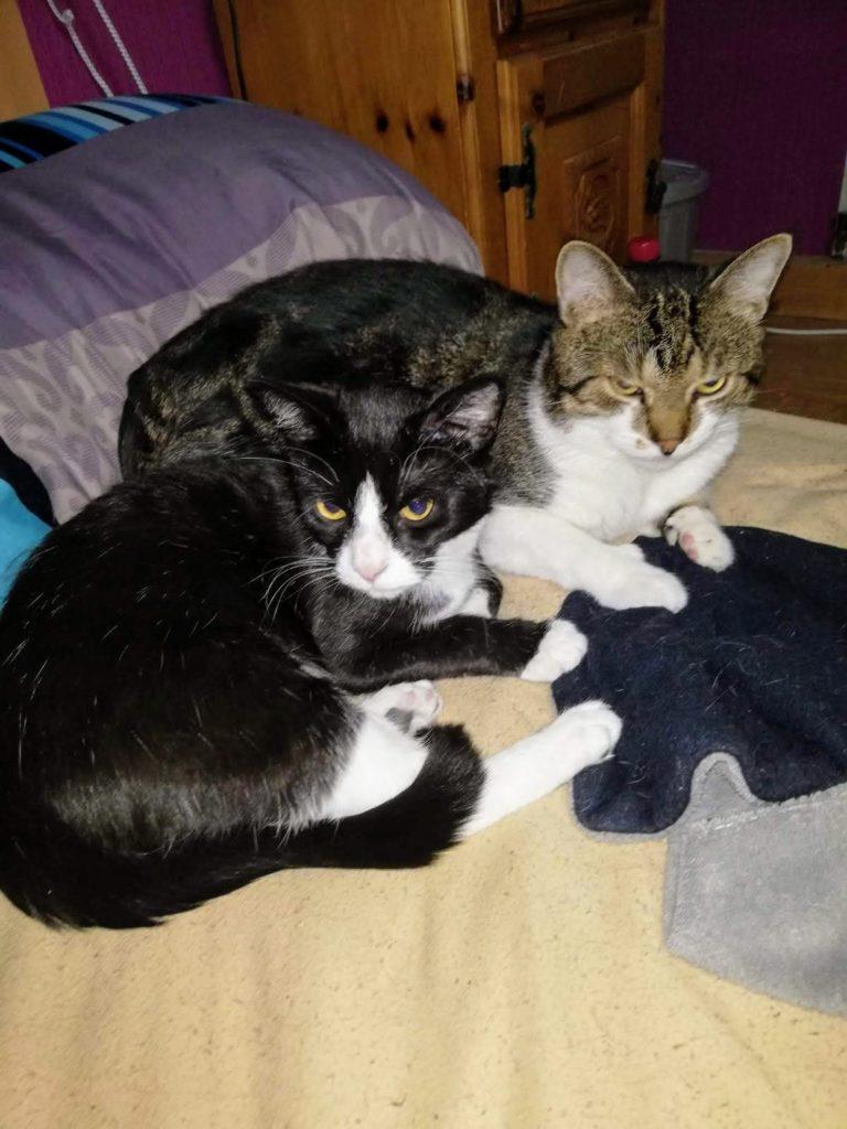 Abby und Sheldon liegen zusammen auf dem Bett