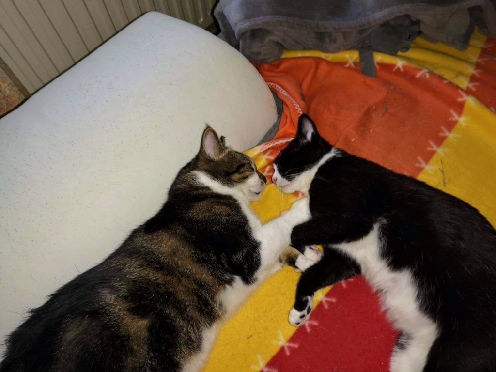 Abby und Sheldon schlafen Nase an Nase