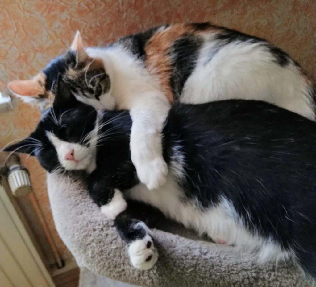 Abby und Lilly schlafen zusammen auf dem Kratzbaum
