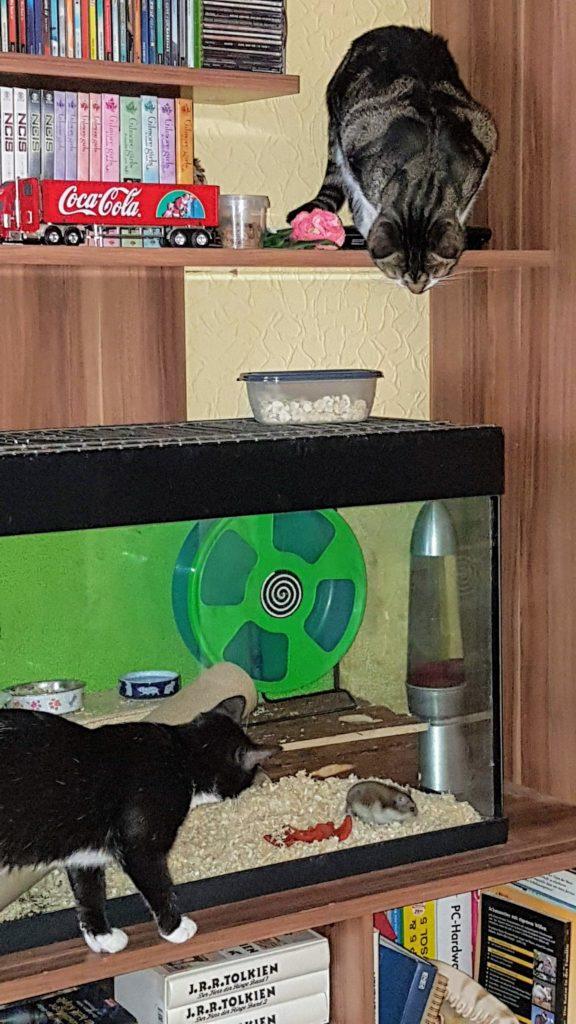 Abby und Sheldon beobachten Schlafmütze